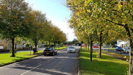 Photo of trees along Gipsy Patch Lane, east of the railway bridge.
